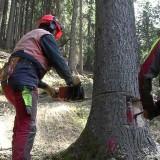lavoratori che tagliano alberi